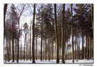 Man sieht den Winterwald......