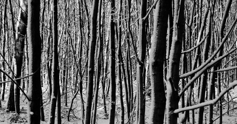Man sieht vor lauter Bäumen den Wald nicht mehr.......