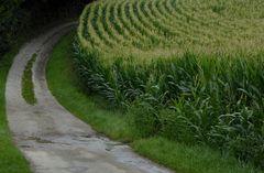 Man sollte nicht Children of corn kennen