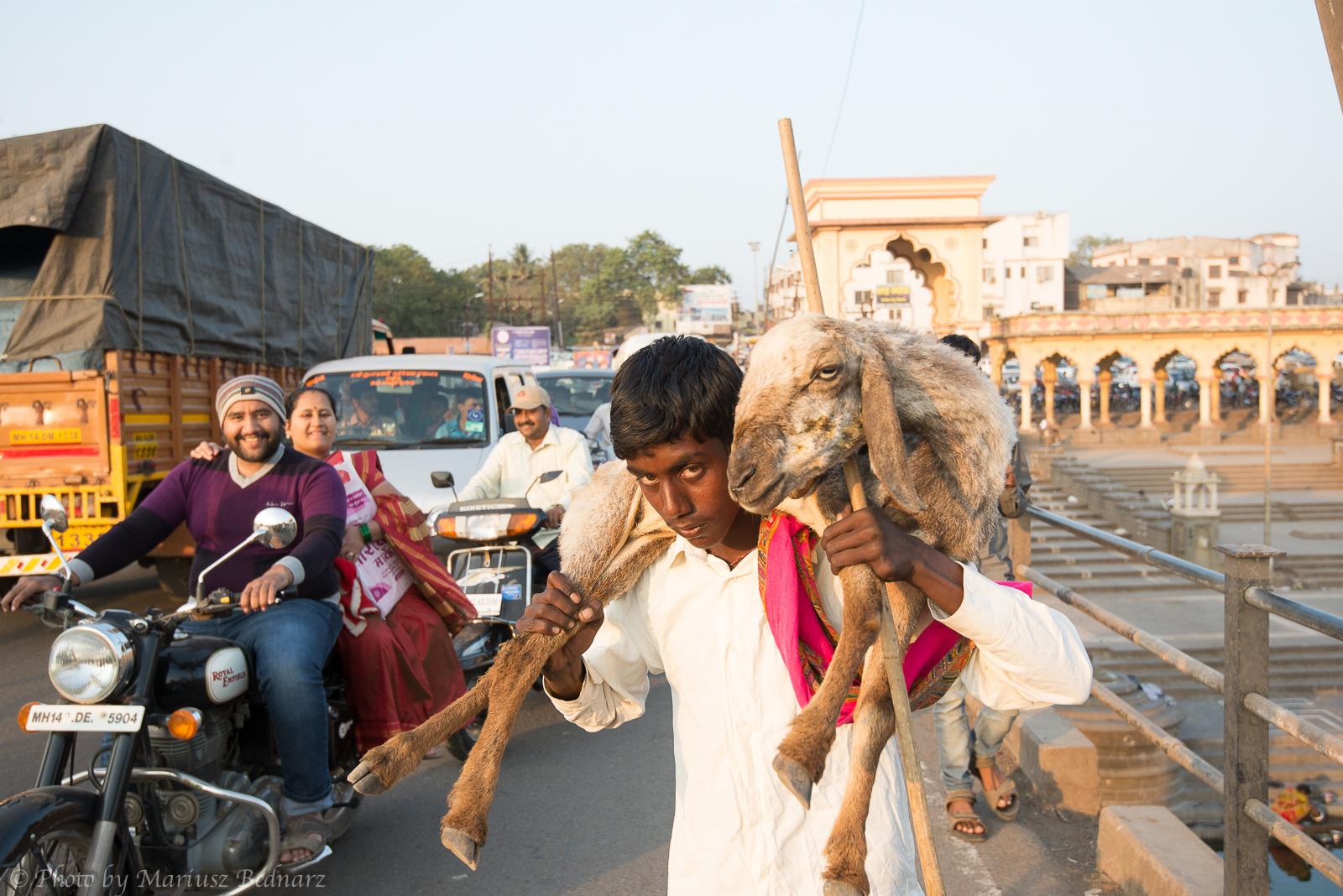 Man with sheep ORYGINAL