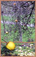 mancher Apfel fällt noch nicht vom Stamm