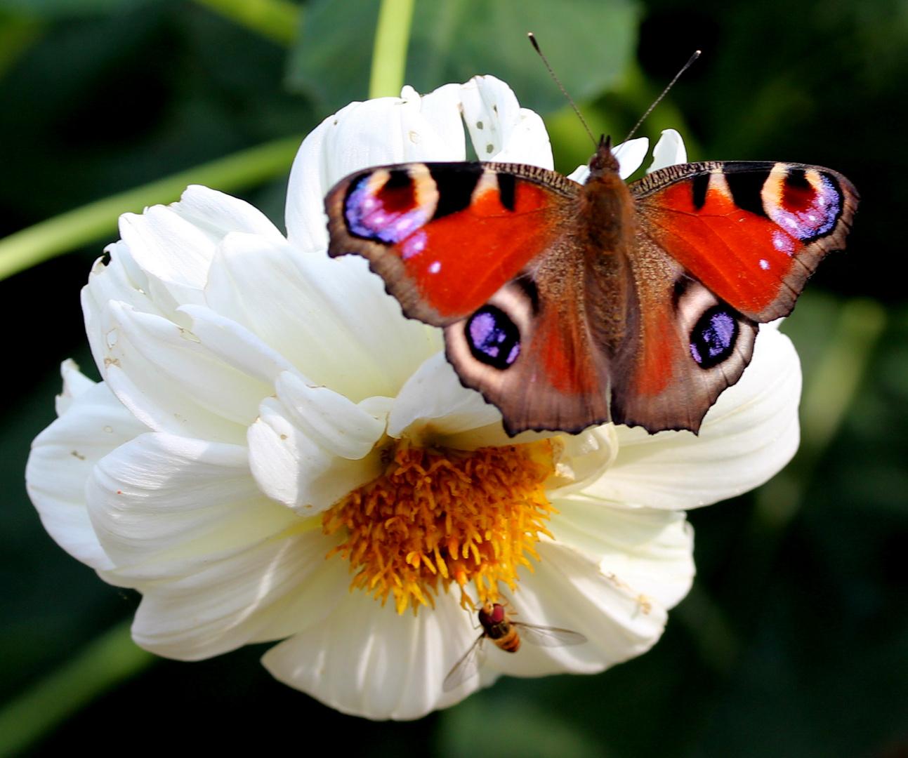 Manchmal muss man sich eine Blüte auch teilen...