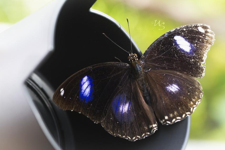 Manchmal verirrt sich auch ein Schmetterling...
