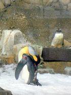 Manchot de l'antarctique