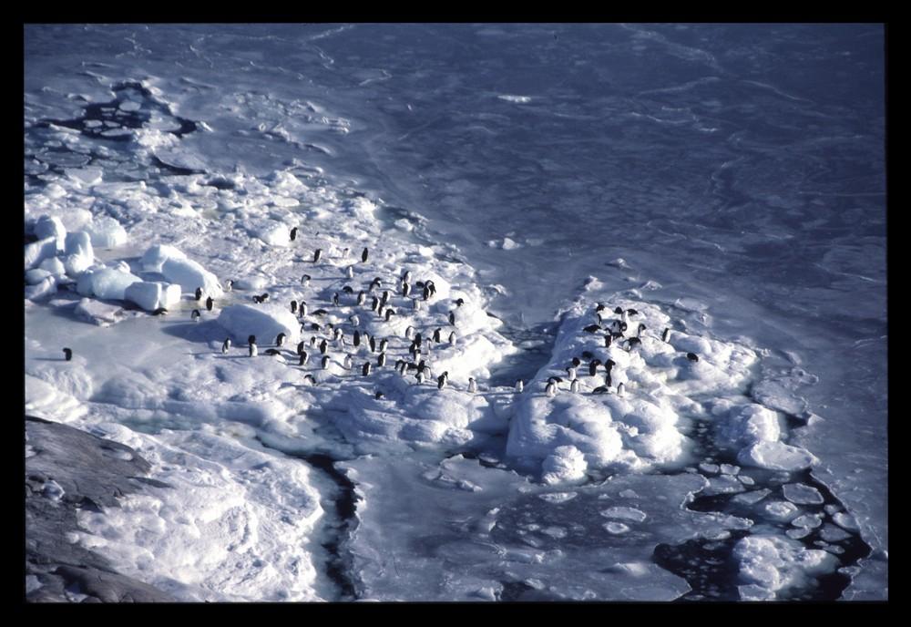 Manchots sur plage gelée