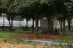 mandarinenfall