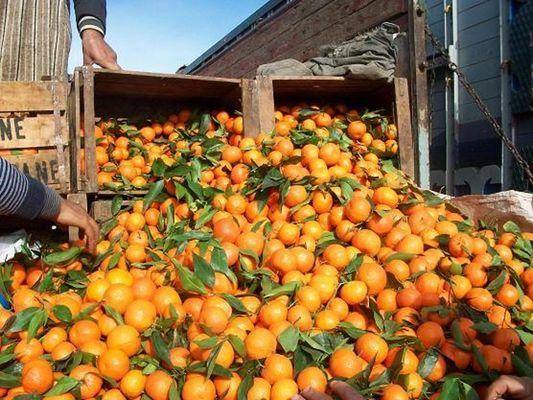Mandarines 2