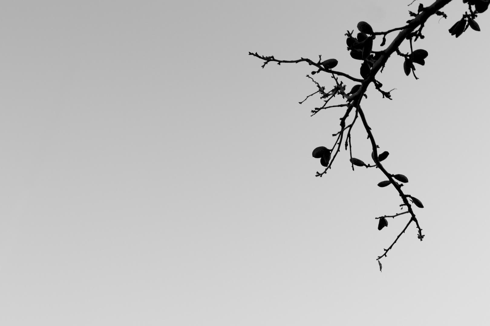 Mandel im Herbst