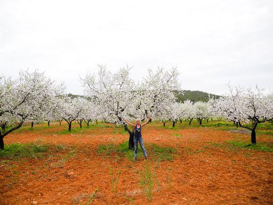 Mandelbäume Feld