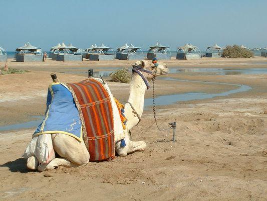 Mangroovy Beach El Gouna
