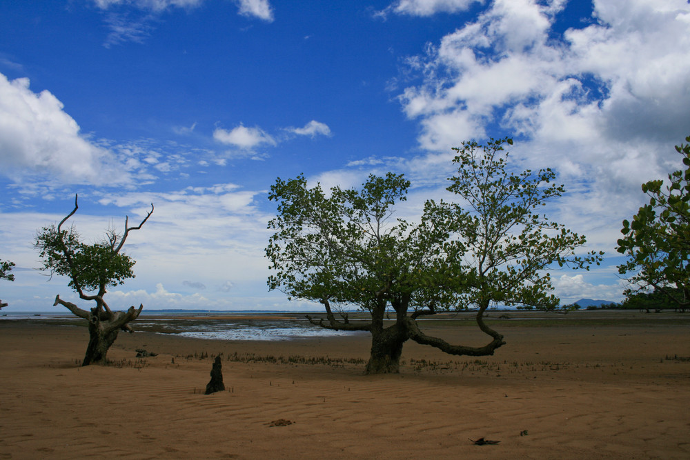 Mangrove (Madagascar)