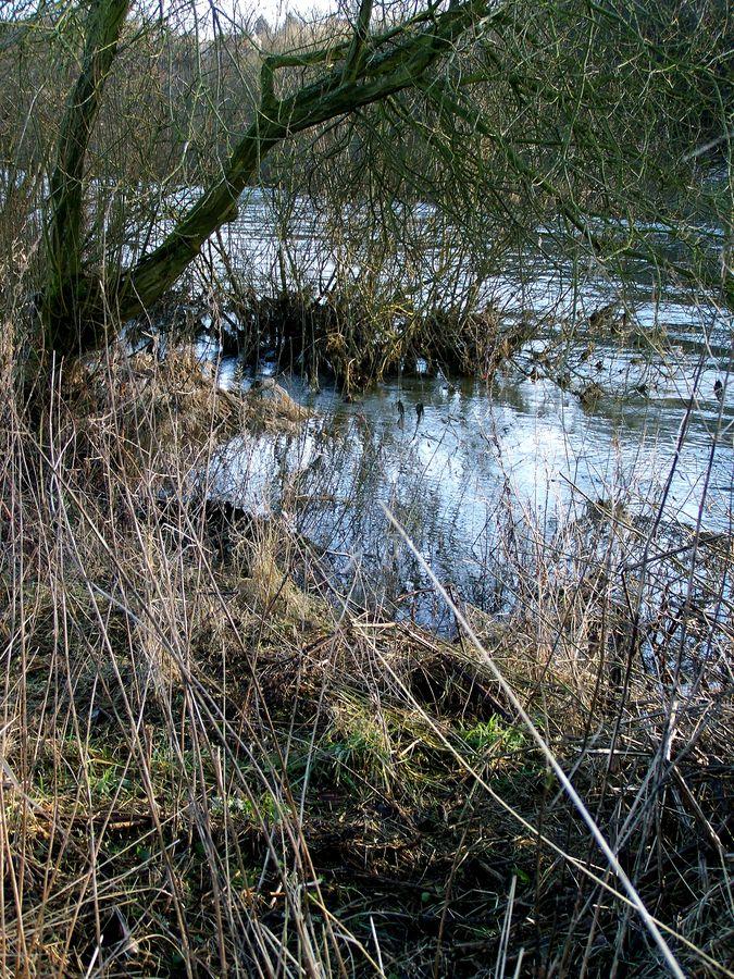 Mangroven? in Bochum?