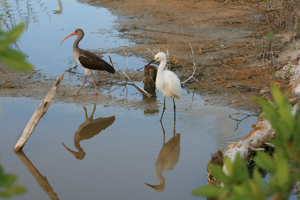mangroven wälder von Cancun.K