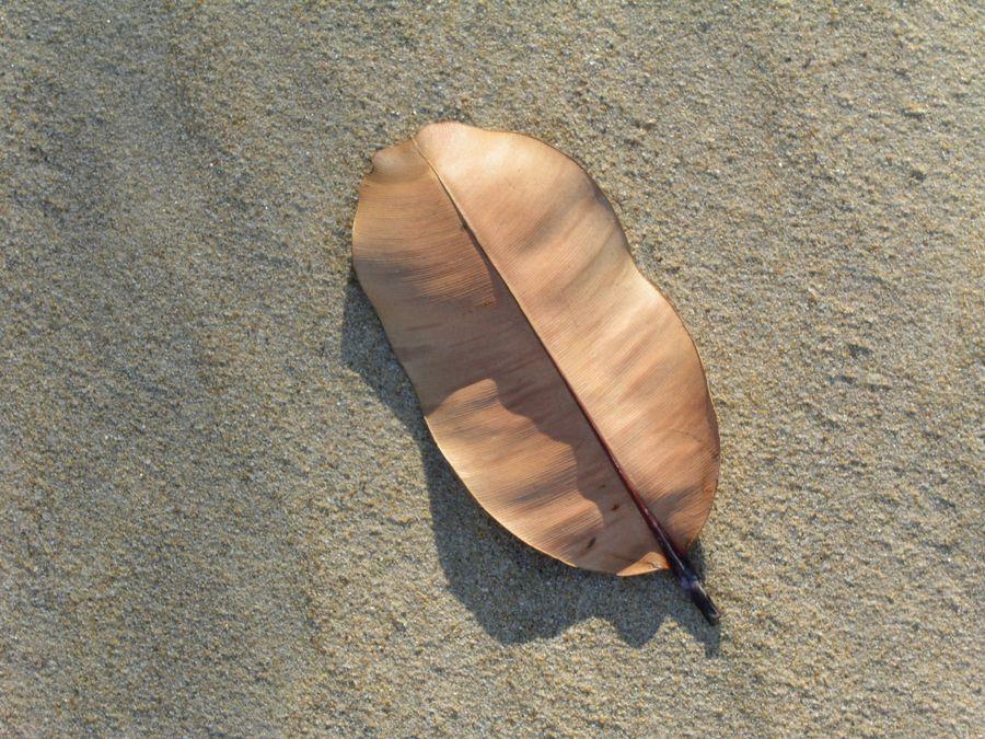 Mangrovenblatt