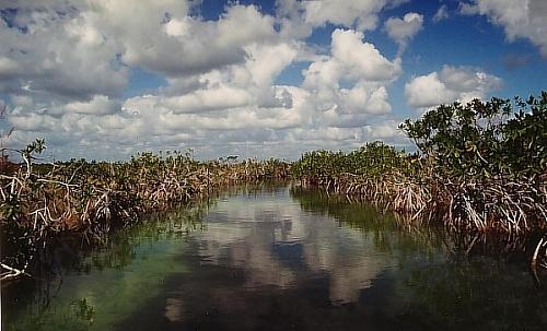 Mangrovenfeld