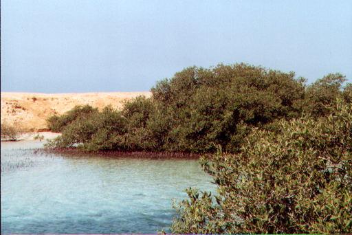 Mangrovenkanal in Ras Mohammed