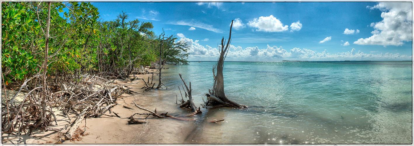 Mangrovenstrand