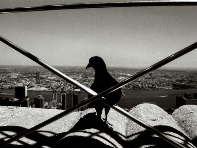 Manhattan aus einer anderen Sicht
