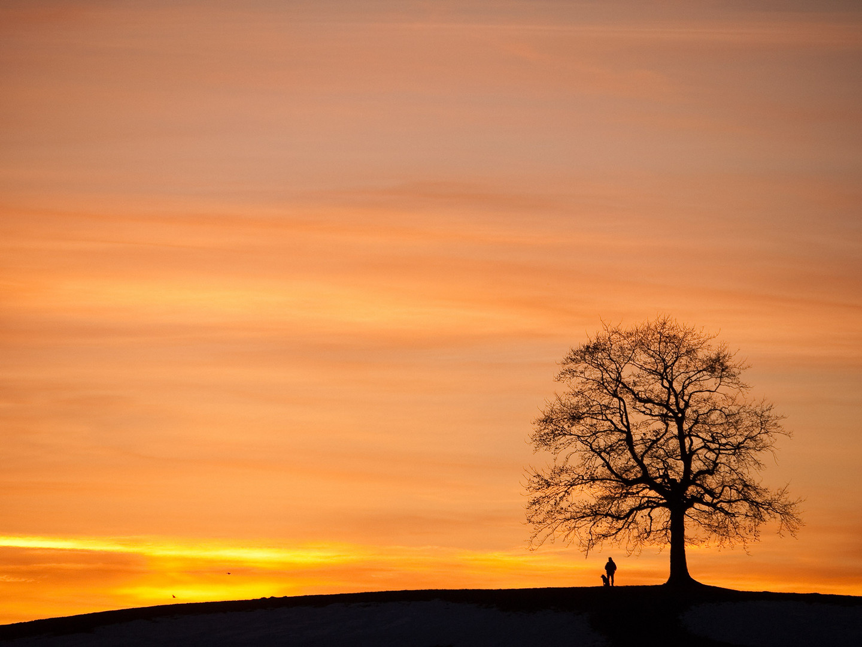 Mann + Hund + Stammbaum = Gassi gehen