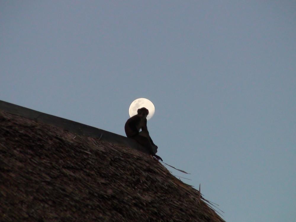 """""""Mann"""" im Mond"""