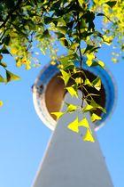 Mannheimer Fernsehturm von unten