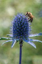 Mannstreuflirt mit Biene