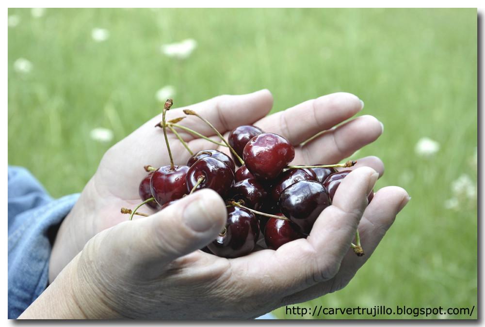manos con cerezas