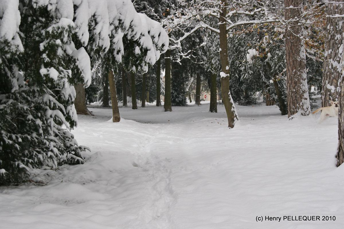 Manteau blanc sous les arbres