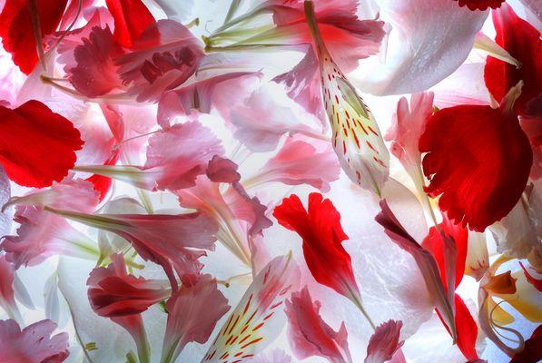 Manto de texturas y colores