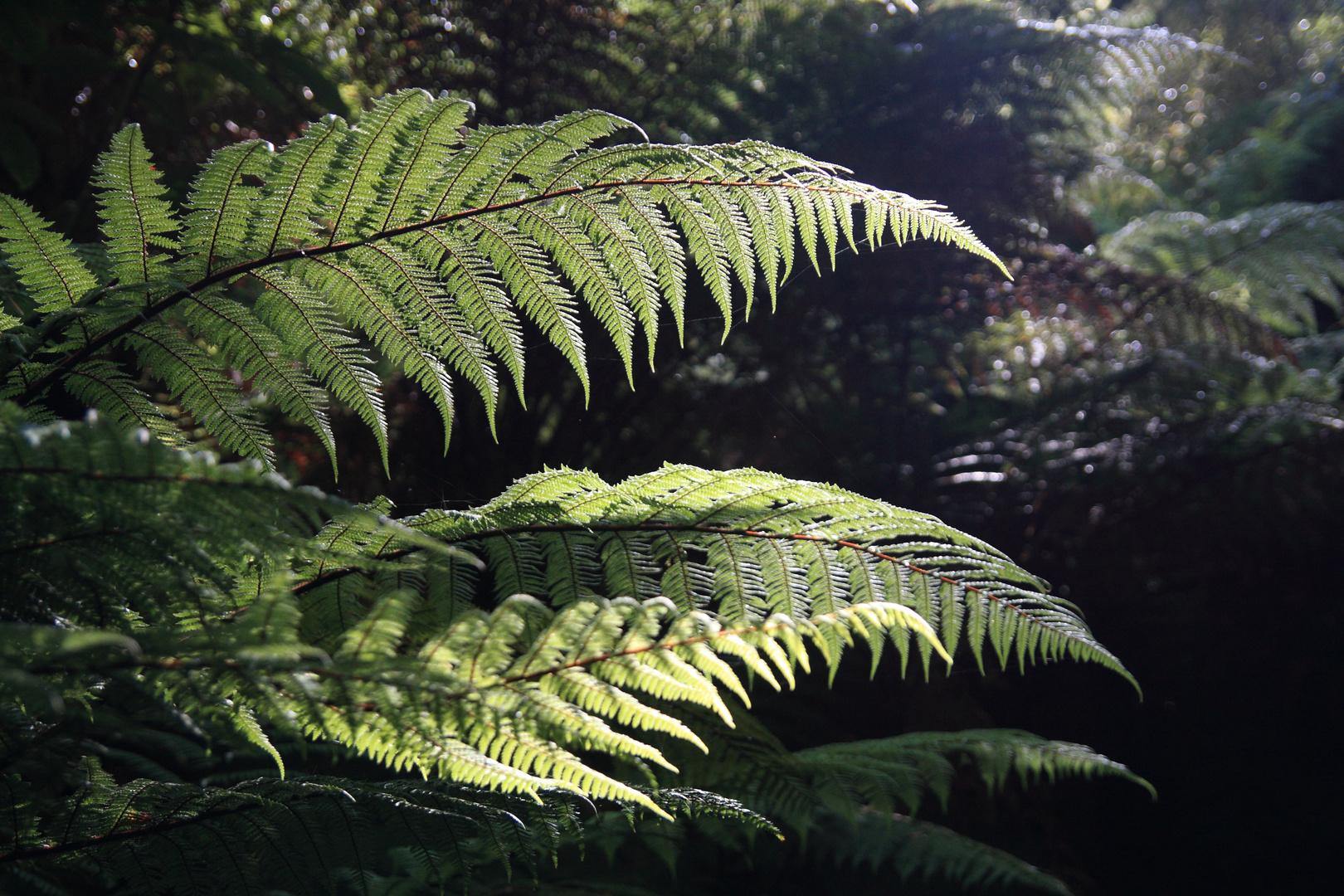 Maori Natur