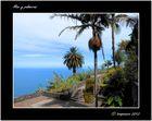 Mar y palmeras