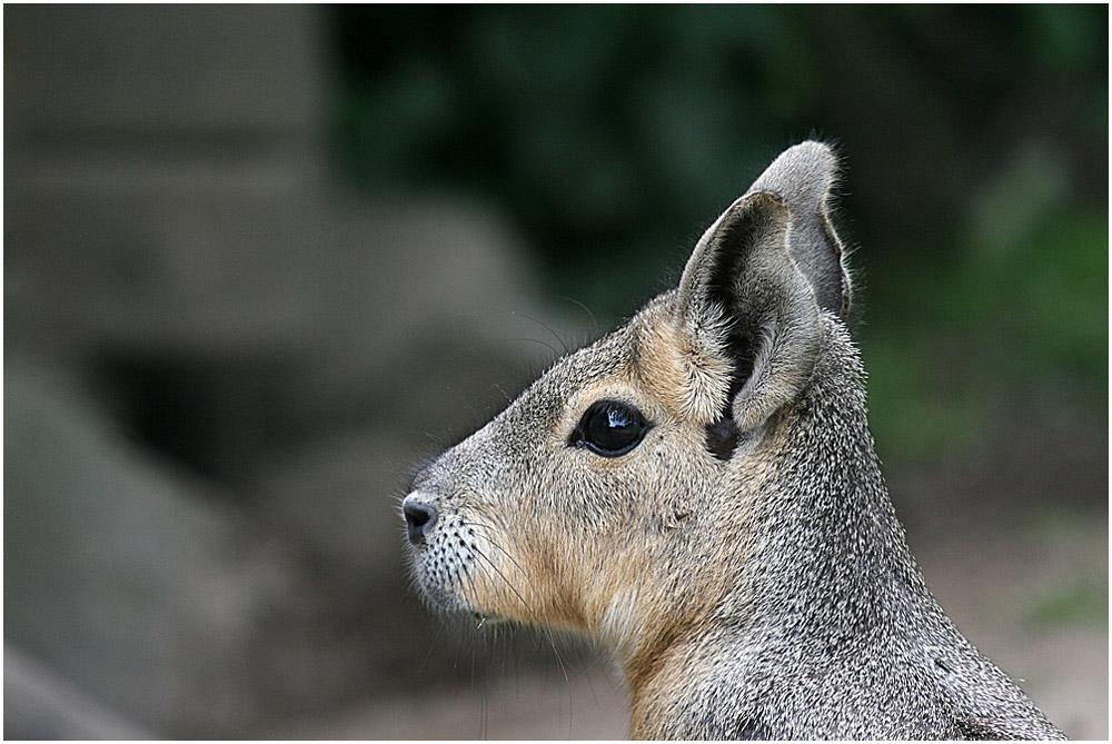 Mara im Profil