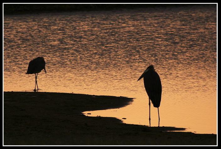 Marabouts au lever du soleil