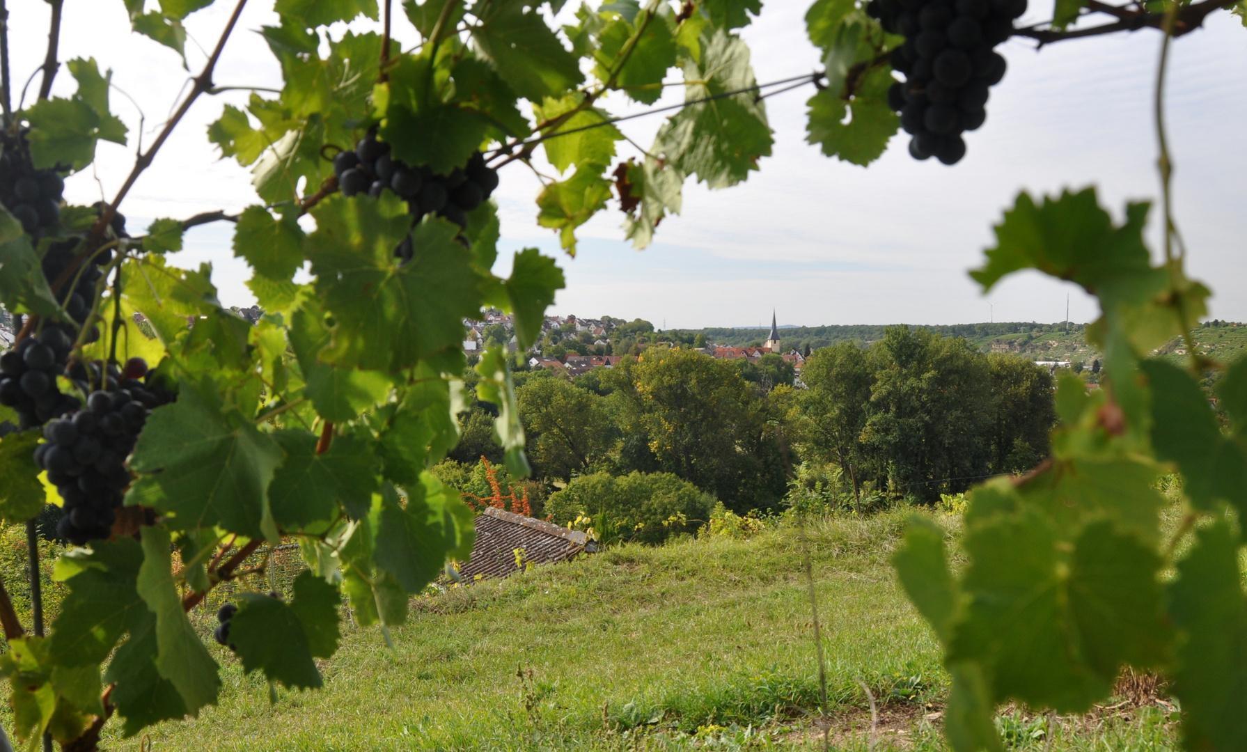 Marbach am Neckar Blick nach Benningen