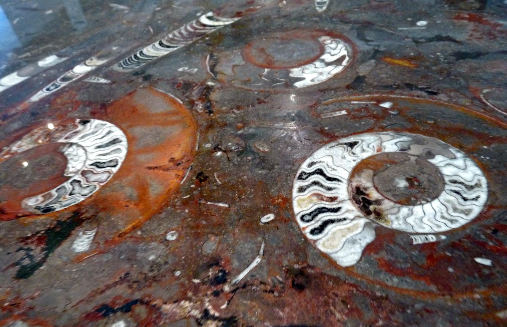Marbre de fossiles.