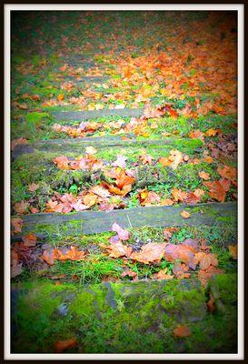 Marches d'automne
