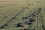 marchfelder gebirgslandschaft