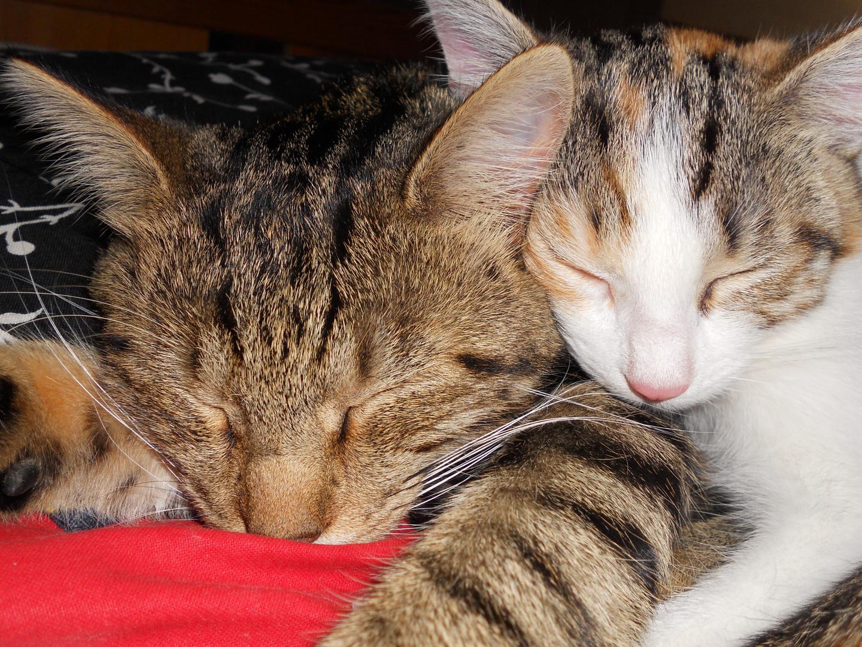 Marco (ca 10 Monate) und Emma (19 Wochen)
