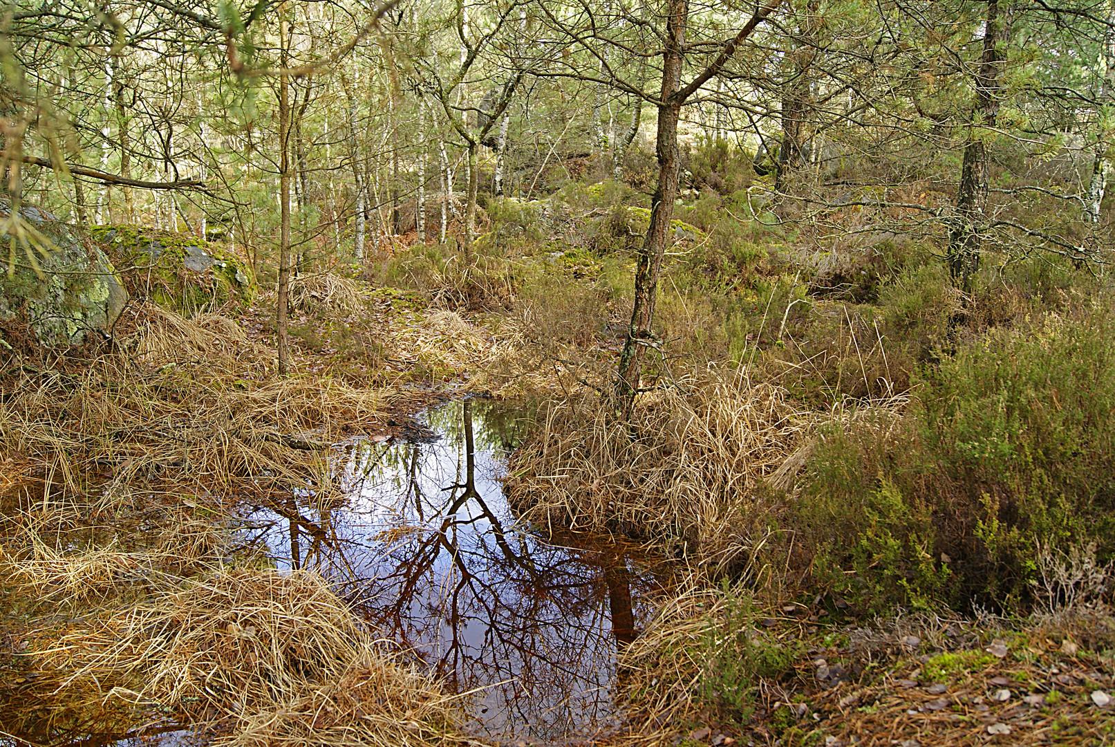 mare et reflets en forêt de Fontainebleau