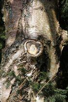 Maria Bild im Baumabschnitt