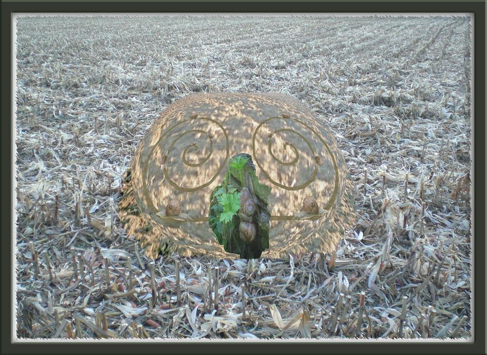 Mariage des escargots - '7'