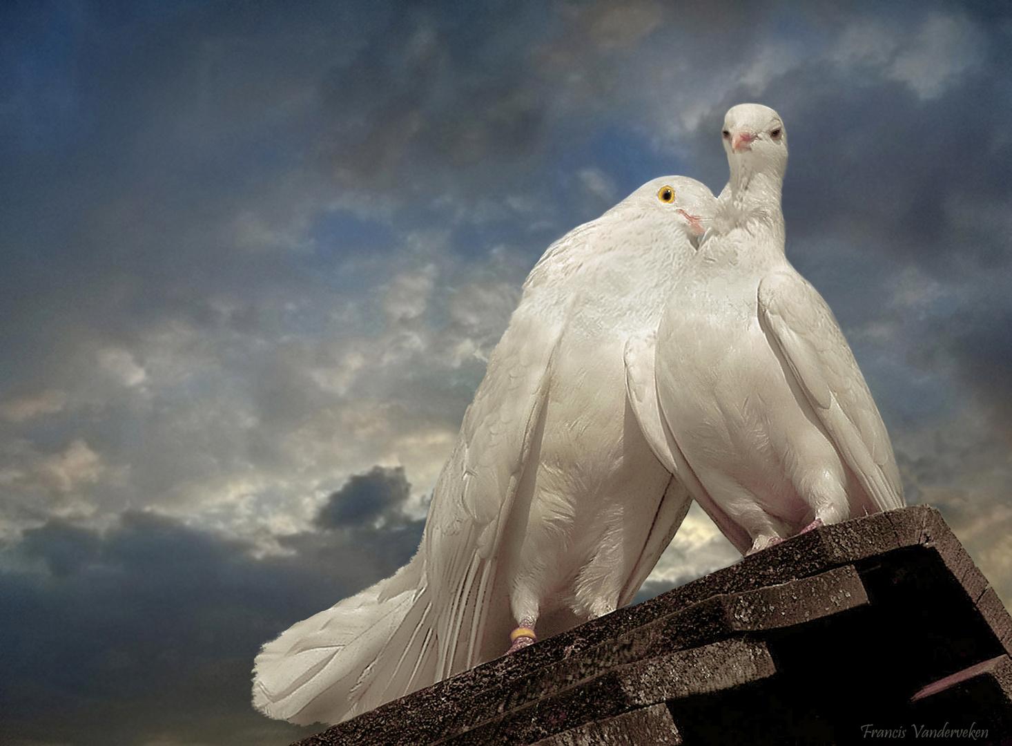 Mariage en blanc.