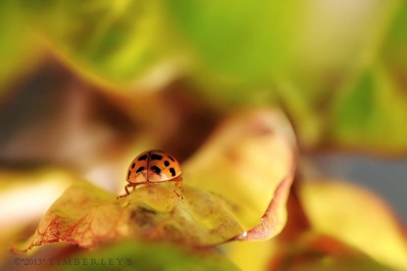 Marienkäferchens Welt