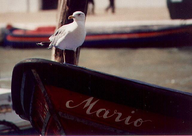 Marios Möwe