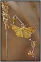 Mariposa 4