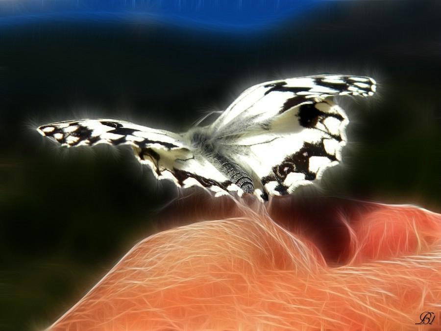 mariposa-5
