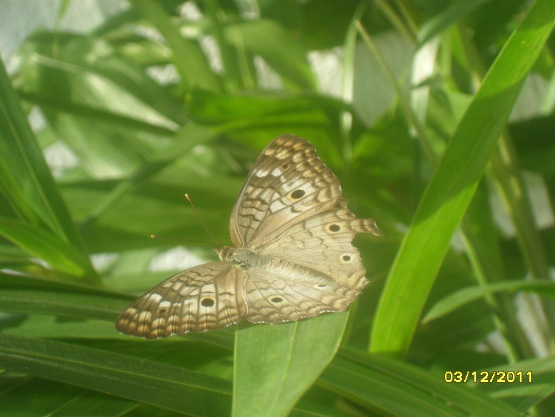 Mariposa en mi Jardin