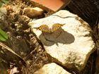 mariposa recortada