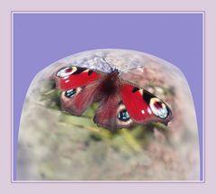 Mariposa  Tag-pfauen -augen