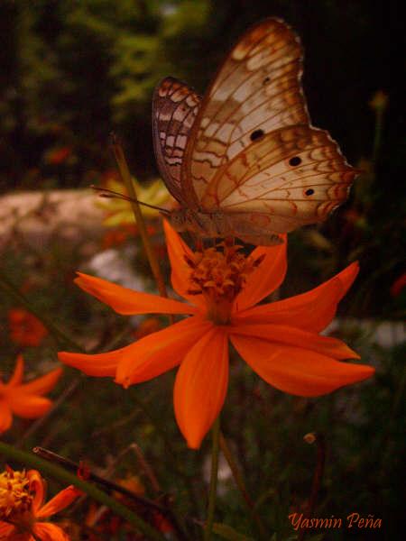 Mariposa y Flor